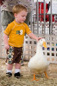 duck and boy
